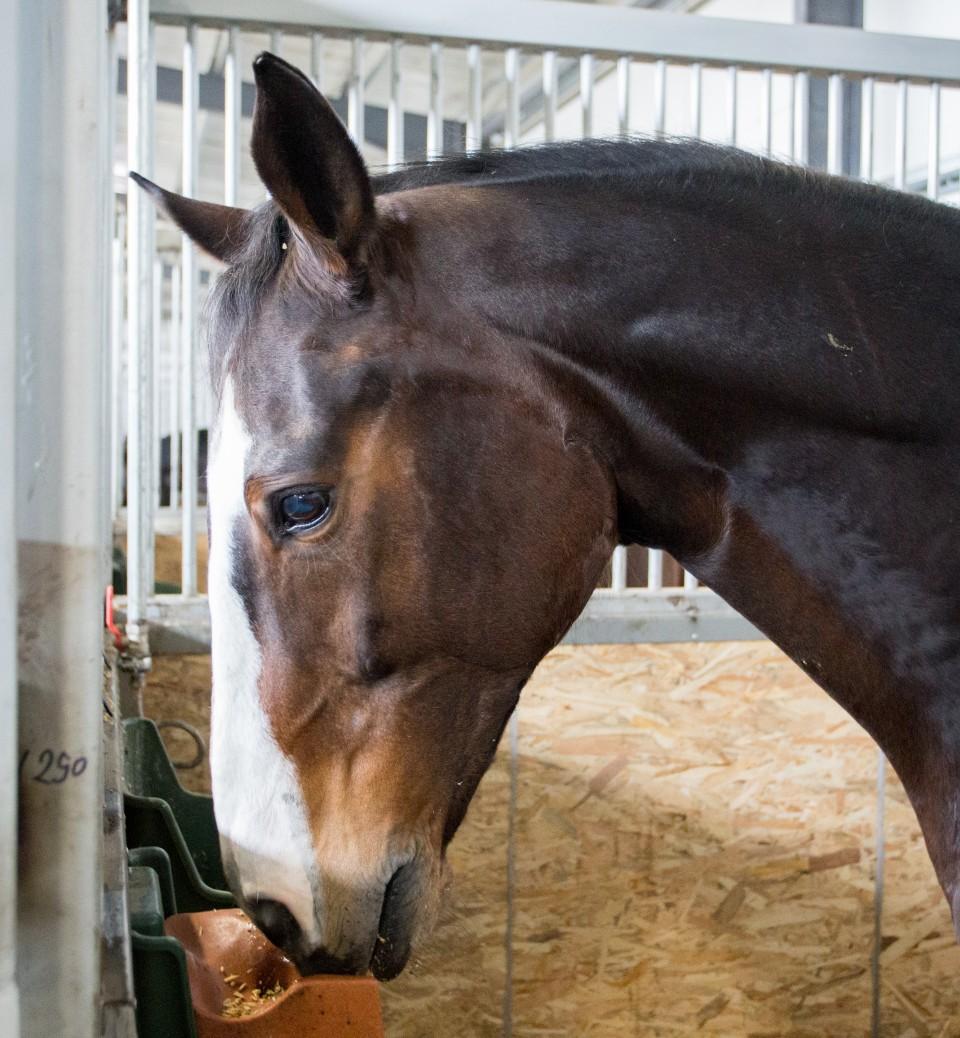HorseBase_164