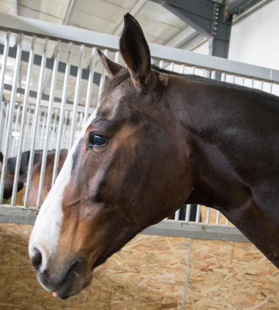 HorseBase_189