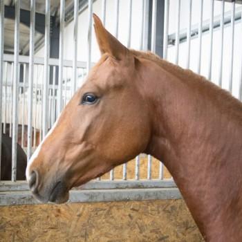 HorseBase_209