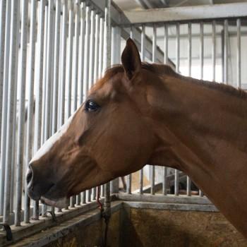 HorseBase_217