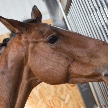 HorseBase-People_5