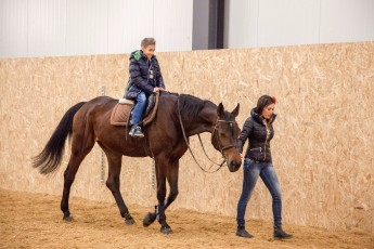 horse-base_239_1