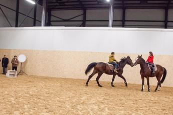 horse-base_336_1