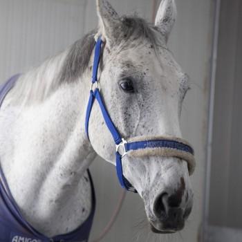 horsebase_412-e1456143010245